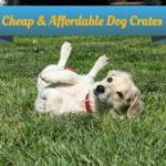 Cheap Dog Crates