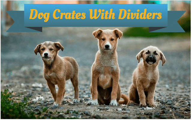 Dog crates with dividers featured image.