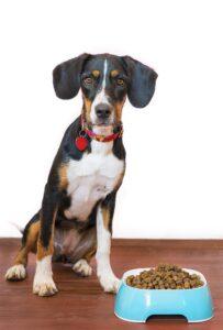 Dog beside food bowl.