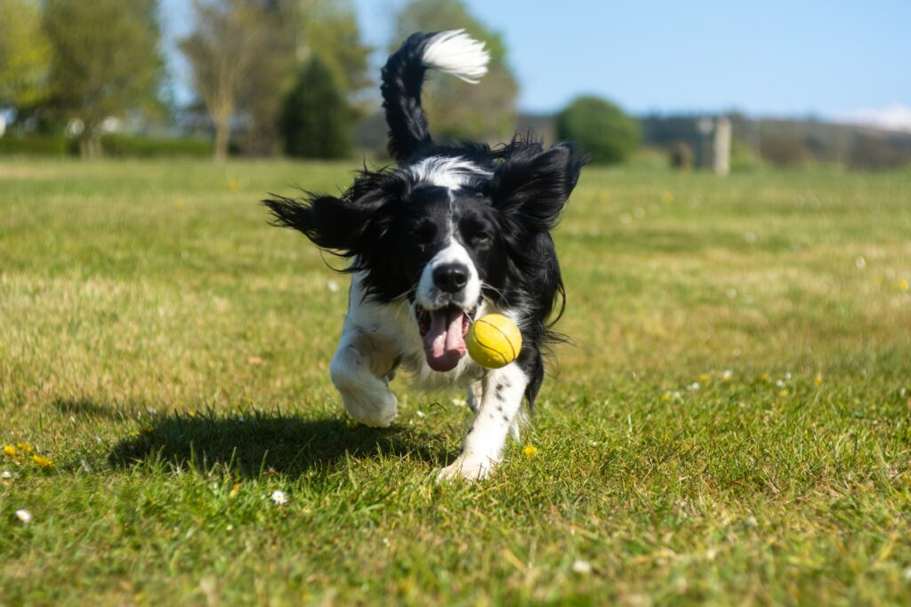 Dog chasing a ball.