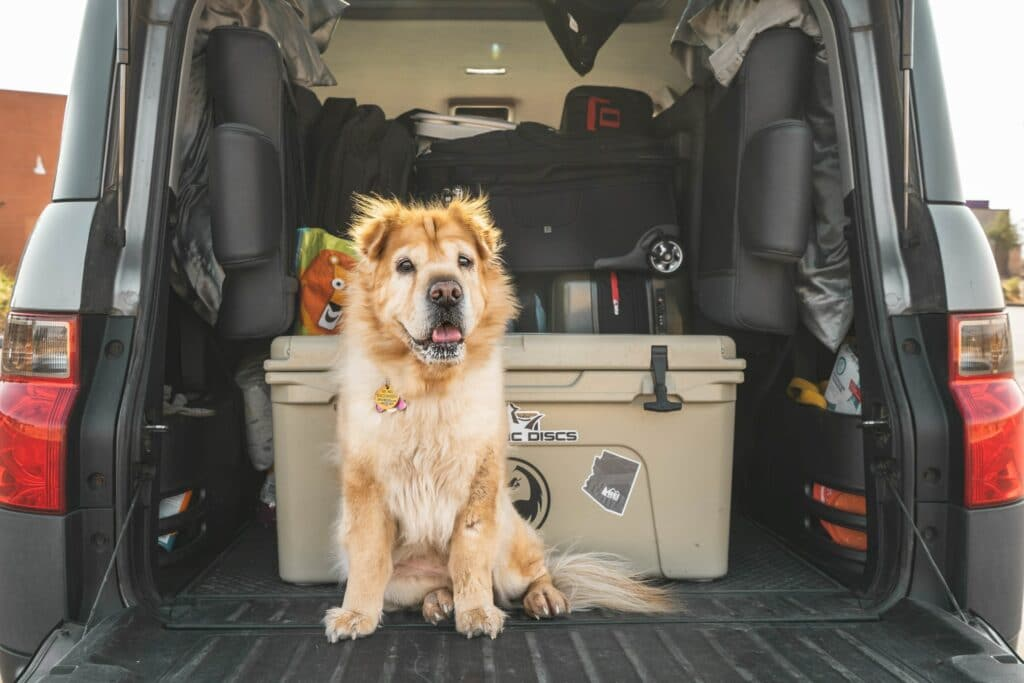 Dog at back of a van.