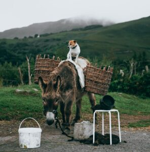 Dog on top of a donkey.