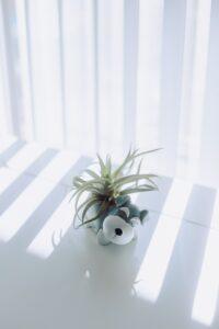Dog-designed plant holder.