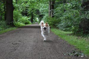 Dog running on road.