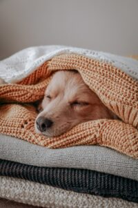 Dog in a burrower sleeping position.