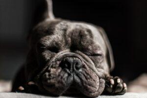 Sleeping dog.