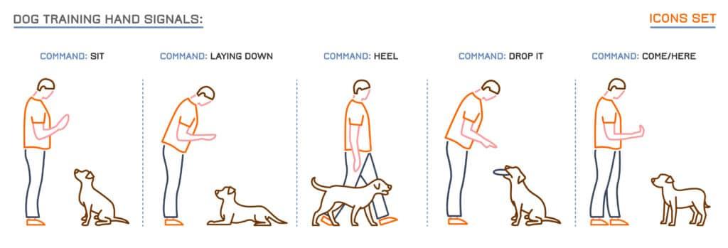 Dog hand training signal chart.