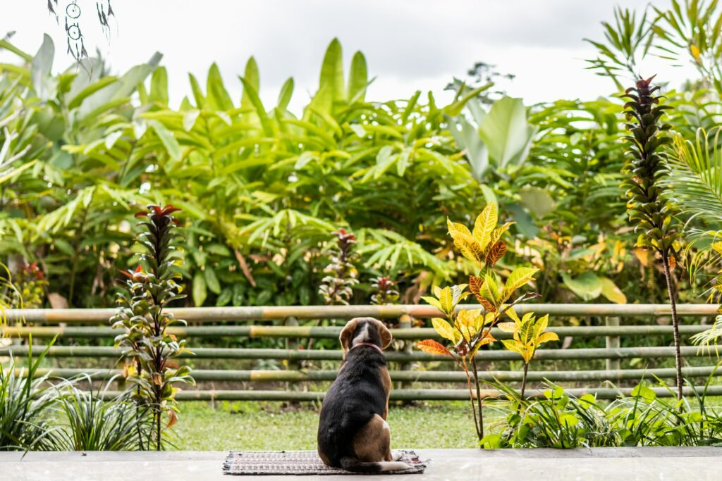 Dog by a tropical place.