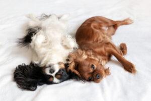 Dog sleeping position: Back to Back.