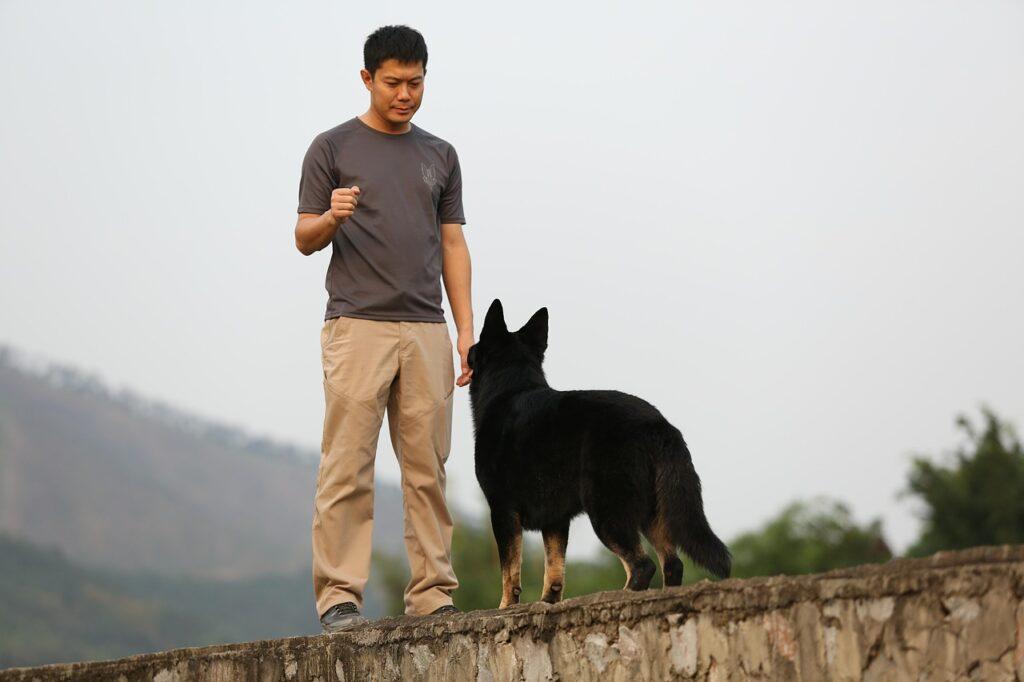 Man training a black dog.