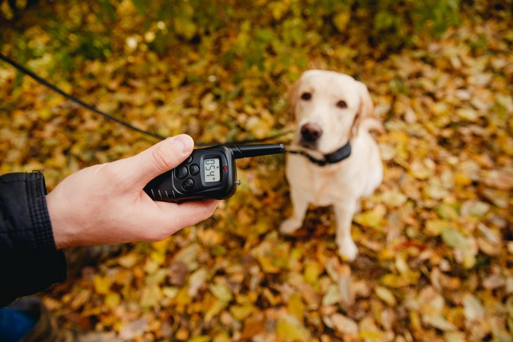 Person holding e-collar remote.