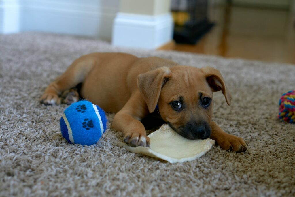 Puppy with toys.