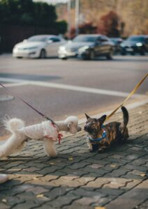 Two dogs meeting.