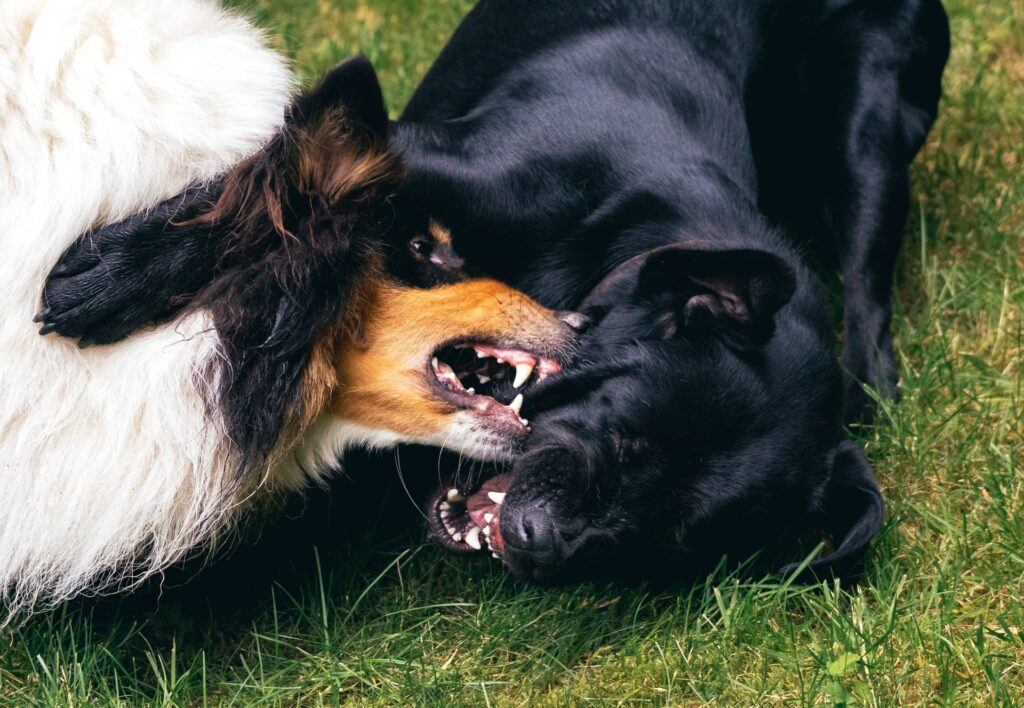 Two dogs play fighting.