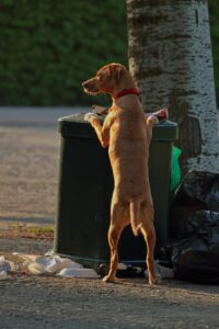 Dog by a trash can.