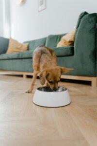 Dog eating in living room.