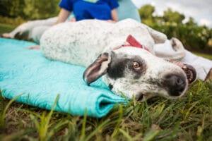 Dog lying on side.